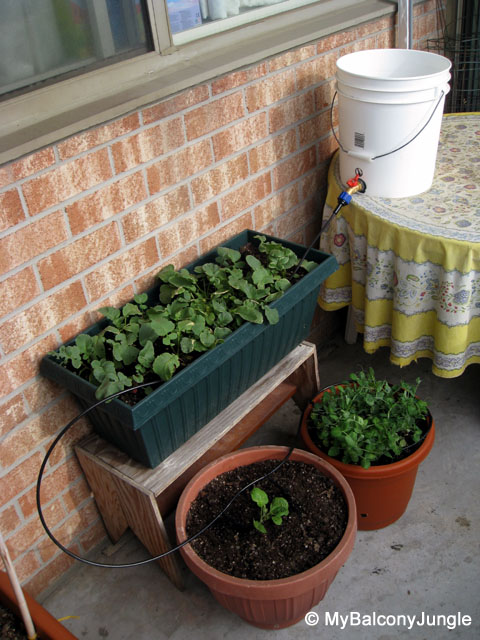Experiments In Balcony Drip Irrigation